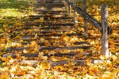 Autunno dorato nel parco della città fotografia stock libera da diritti
