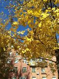 Autunno dorato nella città in buon tempo fotografia stock