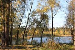 Autunno dorato nella foresta dal lago immagini stock