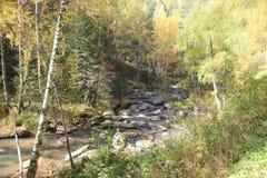 Autunno dorato nella regione di Altai in Russia Bello paesaggio - strada nella foresta di autunno immagini stock libere da diritti
