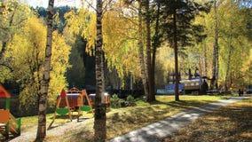 Autunno dorato nella regione di Altai in Russia Bello paesaggio - strada nella foresta di autunno fotografie stock libere da diritti