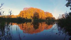 Autunno dorato sul lago della foresta nella sera stock footage