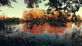 Autunno dorato sul lago della foresta nella sera video d archivio