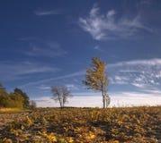 Autunno e cielo immagini stock libere da diritti