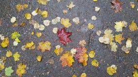 Autunno e pioggia Fotografie Stock Libere da Diritti