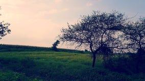 Autunno, erba ed alberi di Shedded!!! fotografia stock
