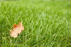 Autunno - erba verde con una foglia gialla Fotografia Stock Libera da Diritti