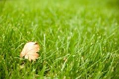Autunno - erba verde con una foglia gialla Fotografia Stock