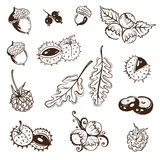 Autunno, foglie, dadi Immagine Stock Libera da Diritti