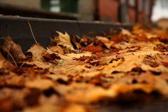 Autunno - foglie di giallo Fotografie Stock Libere da Diritti
