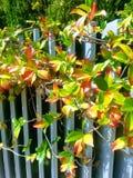 Autunno: foglie di rosso e gialle fotografie stock