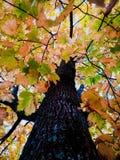 Autunno, foglie, parco, via, stagione, buon tempo, natura fotografia stock