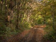 Autunno in Forest Park fotografia stock libera da diritti