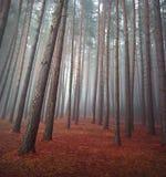 Autunno in foresta Immagini Stock Libere da Diritti