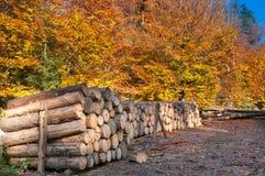 Autunno in foresta Fotografie Stock Libere da Diritti