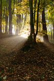 Autunno in foresta Fotografie Stock