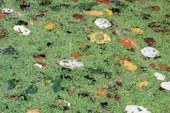 Autunno in foresta Fotografia Stock