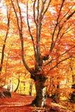Autunno in foresta Fotografia Stock Libera da Diritti