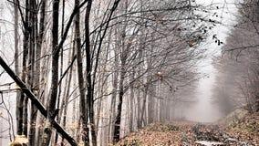 Autunno, foresta, nebbia, stupente Fotografia Stock Libera da Diritti