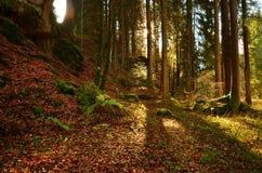 Autunno Forrest Fotografia Stock