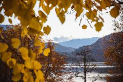 Autunno giallo delle foglie nel lago Bled in Slovenia in vista dell'isola fotografia stock