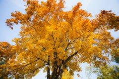 Autunno giallo ed arancio in parco, Varsavia, Polonia Fotografie Stock Libere da Diritti