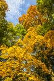 Autunno giallo, verde ed arancio in parco, Varsavia, Polonia Fotografia Stock
