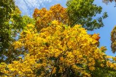 Autunno giallo, verde ed arancio in parco, Varsavia, Polonia Immagini Stock