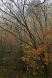 Autunno, grandi montagne fumose NP Fotografie Stock