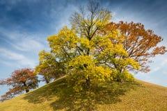 Autunno in Gyeongju Fotografia Stock Libera da Diritti