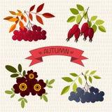 Autunno La cenere di montagna, chokeberry, è aumentato, tagete Fotografia Stock Libera da Diritti