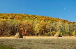 Autunno landscape-2 Immagini Stock Libere da Diritti