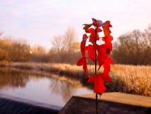 in autunno le foglie girano il rosso Immagini Stock