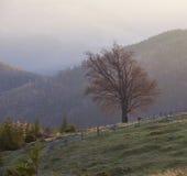 Autunno in montagne carpatiche Immagini Stock