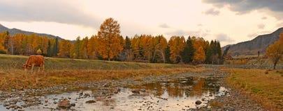 Autunno, montagne di Altai, la valle del fiume, strade non pavimentate, foresta del larice Immagine Stock