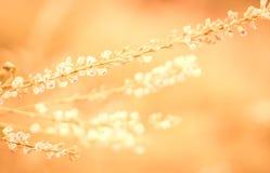 Autunno morbido porpora, fondo viola del fuoco della natura del fiore dell'erba fotografia stock libera da diritti
