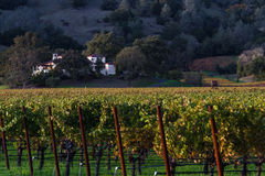 Autunno in Napa Valley Fotografia Stock