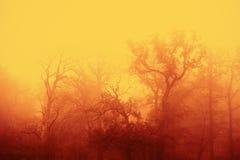 Autunno nebbioso nella foresta di Wisentgehege immagine stock