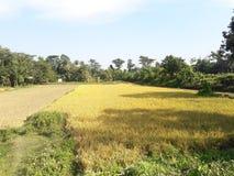 Autunno nel Bangladesh Immagine Stock