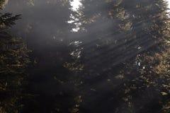 Autunno nel Caucaso Fotografia Stock Libera da Diritti