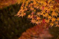 Autunno nel Giappone Fotografia Stock