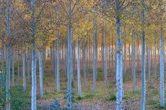 Autunno nel legno Immagini Stock Libere da Diritti