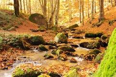 Autunno nel legno dal fiume fotografia stock libera da diritti