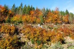 Autunno nel legno nelle colline pedemontana delle montagne di Jeseniky Fotografia Stock