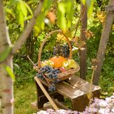 Autunno nel mio giardino Fotografia Stock Libera da Diritti
