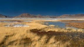 Autunno nel paesaggio delle alte montagne: erba selvatica gialla in mezzo alla valle della montagna, piccole pozze con acqua blu, Fotografia Stock
