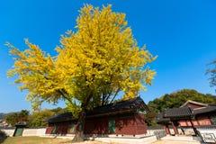 Autunno nel palazzo di Changdeok Immagine Stock
