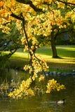 Autunno nel parco - Danimarca Fotografia Stock Libera da Diritti