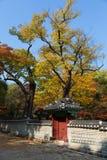 Autunno nel parco del palazzo di Changdeok Immagini Stock Libere da Diritti