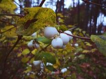 autunno nel parco di Kiev Immagine Stock Libera da Diritti